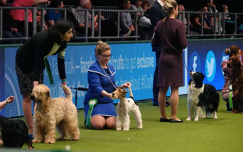 Competition Crufts 2018